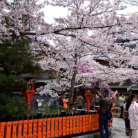 【桜巡りの旅】 心震える美しさ 祇園白川