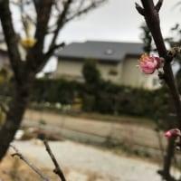 春が近づいてきているのかな?~温かい一日でした~