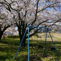 駒ヶ根の春⑤