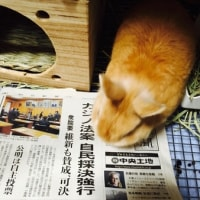 トム・ハンクス主演「インフェルノ」を観る/佐藤正午「書くインタビュー①」を読む