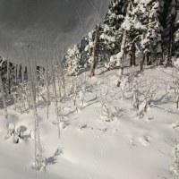 新雪の朝は美しい・・なのだが