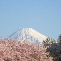 今日の富士山 桜