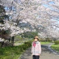 桜見物・お散歩~日和~