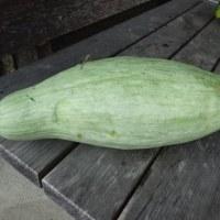 たまには野菜の収穫を