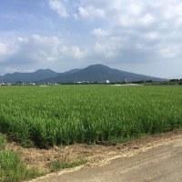 JAいまり 「ホシユタカ」レシピコンクール 最終戦!