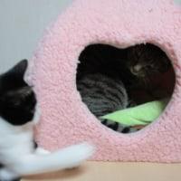 猫と118番の日