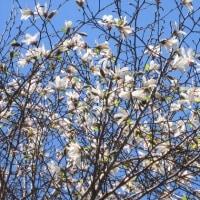 4/24(月)のPACニュース~追分&軽井沢周辺の情報