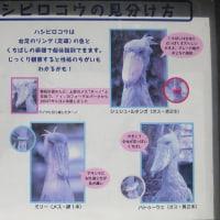 上野動物園リベンジ