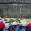 遠足 多摩動物公園