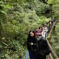 森林浴〜〜奥多摩散歩道!