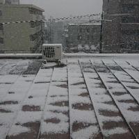 今日は雪が降っています