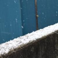 今日は、1日中 雪。。。