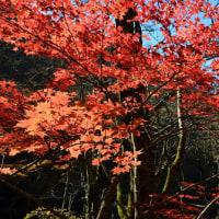 続々・紅葉の山