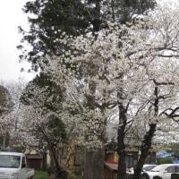 千葉県千葉市内里山 冬期湛水・不耕起移植栽培農法の勉強会に参加した