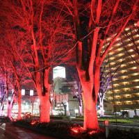 12/1前橋駅前ケヤキ並木通りライトアップ点灯式