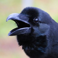 黒くてもかわいい子