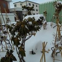 庭の松がコンモリとして、 まるで、おとぎ話に出てくる様な、雪景色…