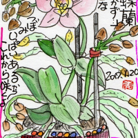 『咲いた胡蝶蘭・・』