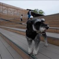 名城公園ジェイ君散歩