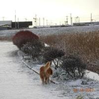 """前橋でも積雪で小躍りする""""カンタ"""" 🎵"""