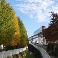 多摩モノレールとイチョウの木