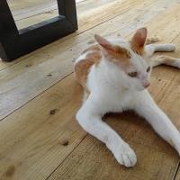 沖縄の猫3
