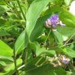 花便り №6 サツキの庭
