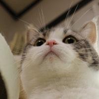 猫とクレマチス ビフォーアフター