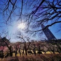超広角レンズ10ミリで撮った早春の新宿御苑