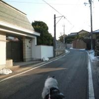 今朝の散歩コース