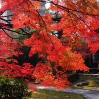 禅隆寺の紅葉と御堂