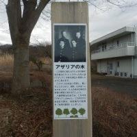 宮崎賢治アザリアの木(小鹿野町)
