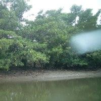 マングローブ林を見ながらカヌーで川下り