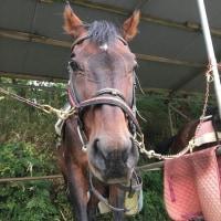 馬の仕事につくために アニベジ奮闘記 エピソード197