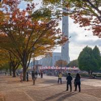 2016.11.13 光が丘公園: 晩秋の風景
