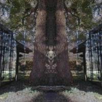 対称風景の作り方