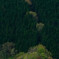 ナメゴ谷の新緑
