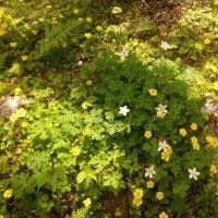 山で出会った花