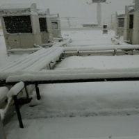 絶賛降雪中
