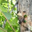 樹液に集まる昆虫