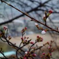 だんだんあったかくなってきて、今日は春の陽気のはず