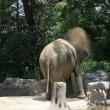 動物園・・・まずはゾウさん