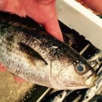夏の焼き魚
