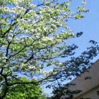 桜から新緑に