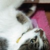迷い猫、にゃぁ~にゃぁ~をついに捕獲!