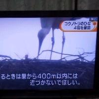「コウノトリ」新旧ニュース