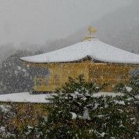 雪の金閣寺に行ったのですが