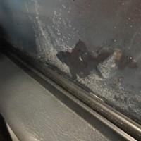 バスの中の窓の結露が、、