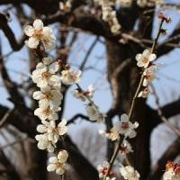 お花がどんどん咲き始めていた、昭和記念公園