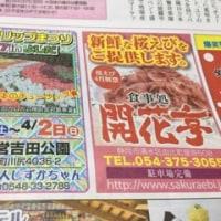 桜の蕾はかたいですが〜〜桜エビ漁は 解禁です